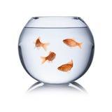 Fishbowl Стоковые Изображения RF