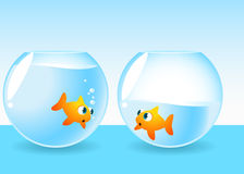 Fishbowl Fish Running Out of water. Looking desperately at friend's fish tank  illustration Stock Photography