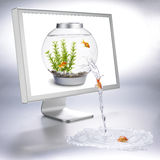 Fishbowl Fluss Stockbild