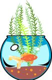 Fishbowl with goldfish Royalty Free Stock Images