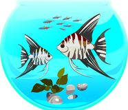 Fishbowl with neon and angelfish Stock Images