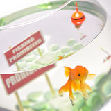 Fishbowl with prohibition sign sin cap and hook. Goldfish in aquarium  on white background Royalty Free Stock Image