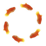 Fishcircle Royalty Free Stock Photo