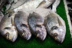 Fished. Gilded, eatable fish in a fish market Royalty Free Stock Photography