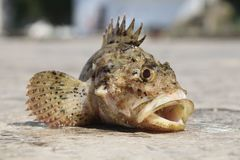 Fished gouper and baked in the water Royalty Free Stock Photography
