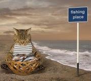 Fisher кота на пляже стоковое фото