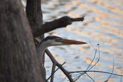 fisher молчком Стоковая Фотография