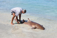 Fisher with hammerhead shark. In french west indies Stock Image