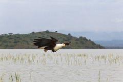 Fisher on the lake. Eagle. Baringo lake. Fisher on the lake. Eagle. Baringo lake, Kenya Stock Photography