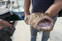 Fisher mit einem Frogfish Lizenzfreie Stockfotografie