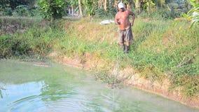 Fisher Old-mens 60 éénjarigen die de katvis van de visnetvangst gebruiken stock footage