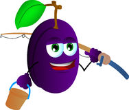 Fisher plum Royalty Free Stock Photo