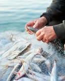 Fisher prend des poissons hors du filet images stock