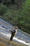 Fisher in river. A man in river fishes trouts with rod Stock Images
