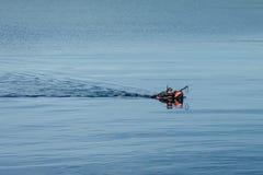 Fisher simning för fisk arkivbilder