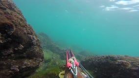 Fisher subaquático da lança com arma que explora as águas Spearfishing no mar vídeos de arquivo
