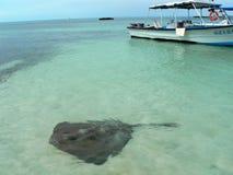fisherboatstingray Arkivbild