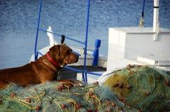 Fisherdog Royalty Free Stock Photos