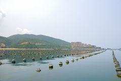 Fisheries. This fisheries can be found in shenzhen from China Stock Image