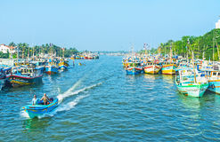 The fisheries harbor of Negombo royalty free stock images