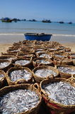 Fisheries are located on the beach in many baskets waiting for uploading onto the truck to the processing plant Royalty Free Stock Photos