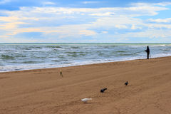 Fisherman on the beach. With pigeon, dove and rose Royalty Free Stock Photo