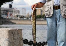 Fisherman with big fish on the embankment of the Moskva River Stock Photo