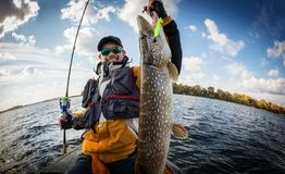 Fisherman and big trophy Pike. stock photos