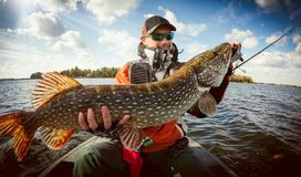 Fisherman and big trophy Pike. stock image