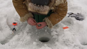 Fisherman bloodworms pulled smartly a hook for ice fishing. stock video