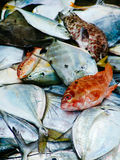 Fisherman catch of fresh tropical fishes. morning market in Asia Royalty Free Stock Images
