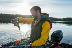 Fisherman catched a haddock in the sea Royalty Free Stock Image