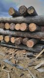 A pile of deadwood. Logs split and stacked outdoors Royalty Free Stock Photography
