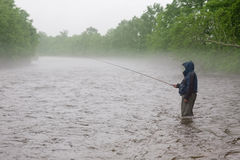 Fisherman catches a salmon river Royalty Free Stock Image
