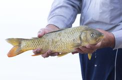 Fisherman caught a fish Royalty Free Stock Image
