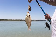 Fisherman caught a fish Royalty Free Stock Images