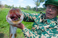 A fisherman caught a pike Royalty Free Stock Photo