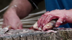 Fisherman cleaning and cutting fresh fish stock footage