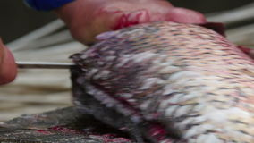 Fisherman cleaning and cutting fresh fish stock video footage