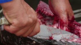 Fisherman cleaning and cutting fresh fish stock video
