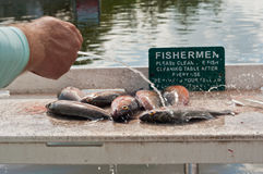 Free Fisherman Cleaning Fish At A Cleaning Station Stock Photo - 84083400