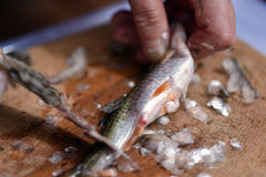 Fisherman cleaning a fish for dinner Royalty Free Stock Photo