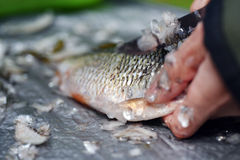 Fisherman cleaning a fish Royalty Free Stock Photos