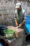 A fisherman cleans a fish at the busy port of Essaouira in Morocco. Stock Photography