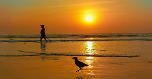 Fisherman and crow on sunset background. Stock Photo