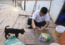 Fisherman cut fish food to feed the dog Royalty Free Stock Photo