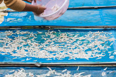Fisherman are drying small fishes Royalty Free Stock Photo