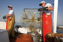 A fisherman emptying out the crabs Stock Photo