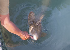 Fisherman feeding shark in floating basket in south of Thailand Royalty Free Stock Photography