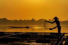 Fisherman feeds the fish in a commercial farm in Mekong river. Farmers feeding fish in cages, Mekong River. The Tilapia for royalty free stock image